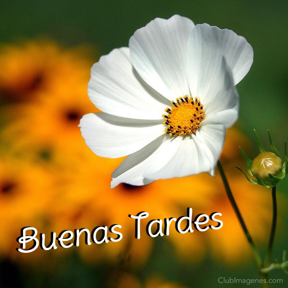 Hermosa flor blanca natural...