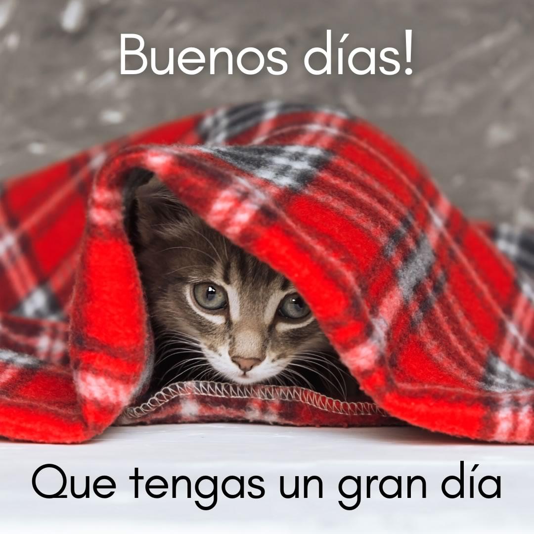 Un gato te dice buenos...